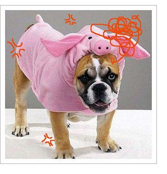 ピンクのプタ着たブルドック 変な犬の服