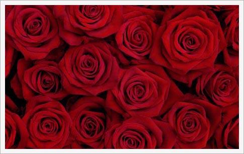 ブログ, エッセイ, シングルマザー, 海外生活, 人気のブログ, 注目のブログ, 話題のエッセイ, カリフォルニア生活, アメリカ生活, ノンフィクション, 現代画家, 人気, アーティスト, サンフランシスコ, フェースブック話題の人, 話題の人, 海外の日本人アーティスト, 薔薇の花束, 真っ赤な薔薇, 薔薇, バラ, 情熱, バレンタインデー, 愛, ロマンス, パッション, 花束, 美しいもの, レッド, 赤, 深紅, 記念日, 愛の告白, 贈り物, 恋人, 幸福, 美しい生活