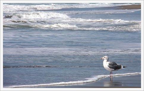 ブログ, エッセイ, シングルマザー, 海外生活, 人気のブログ, 注目のブログ, 話題のエッセイ, カリフォルニア生活, アメリカ生活, ノンフィクション, 現代画家, 人気, アーティスト, サンフランシスコ, フェースブック話題の人, 話題の人, 海外の日本人アーティスト, ビーチ, 砂浜, カモメ, 夏, 海, 波打ち際, 海岸