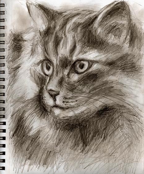 ... drawing, mono tone drawing, gift for cat lovers, love cat, animal love