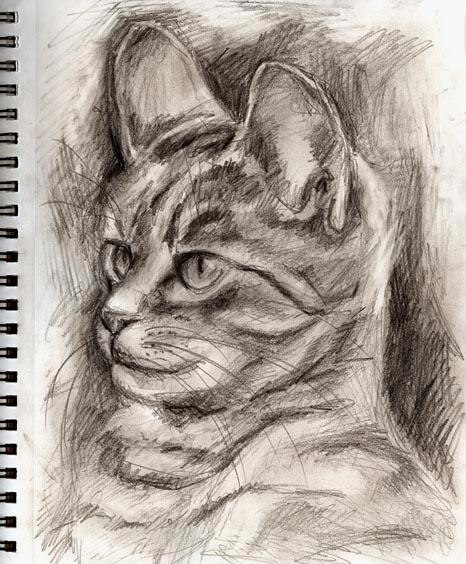 Original drawings mono tone cat study drawing no 3 for Cool drawing websites